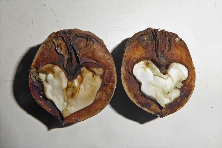 walnut hearts