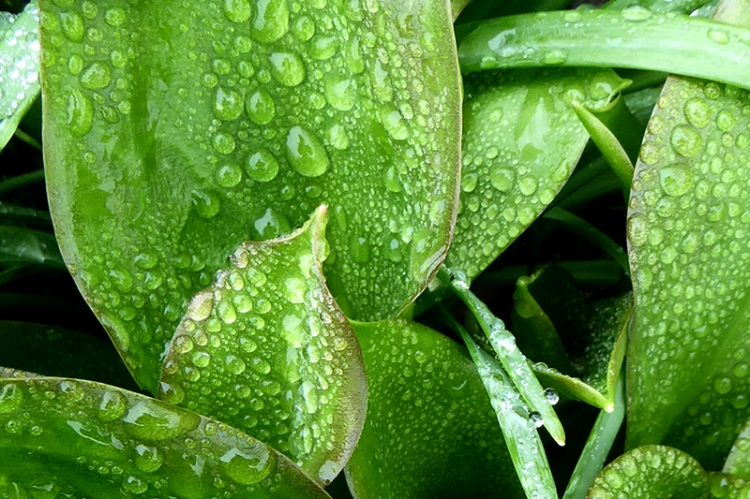 another leaf with raindrops