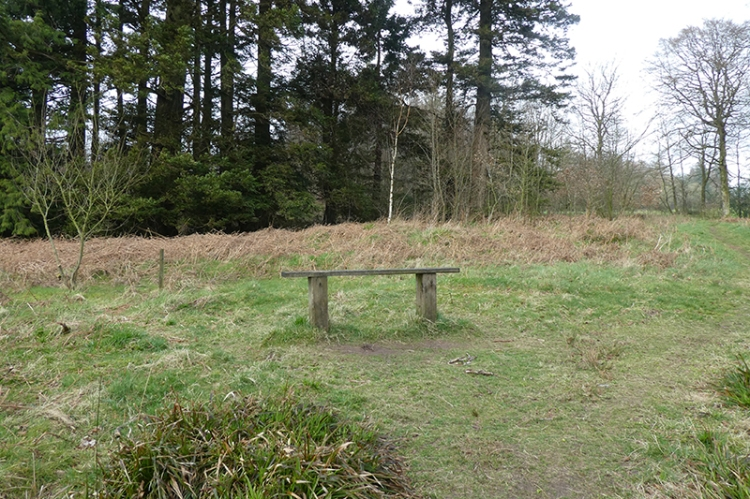 bench in byreburn wood