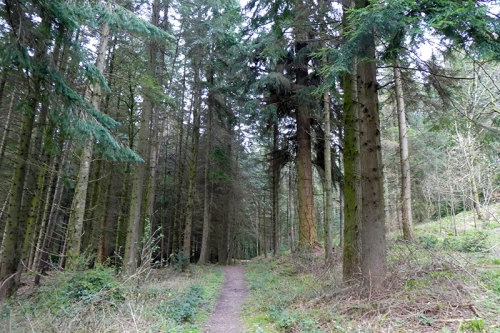 big trees byreburn