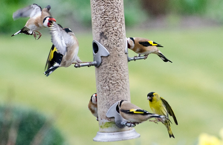 busy feeder full