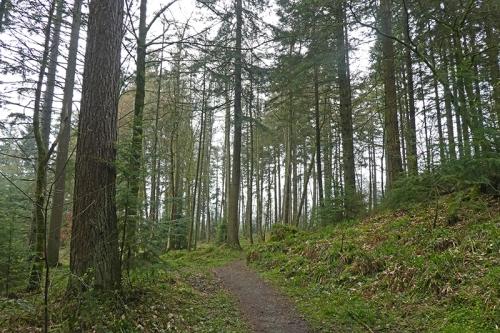 byreburn wood trail