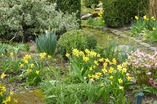 daffodils under feeder