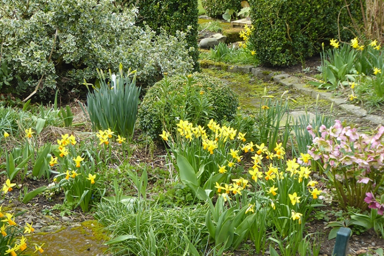 daffodils under feeder