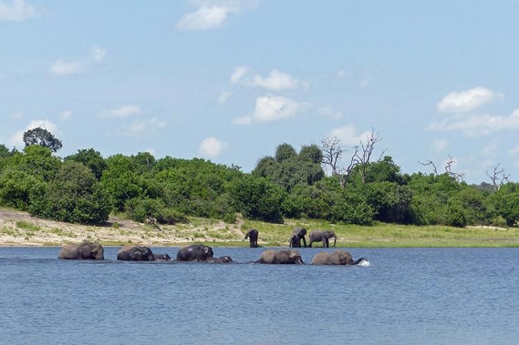 Elephant crossing,