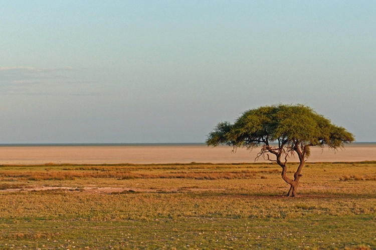 Etosha Pan, Namibia,