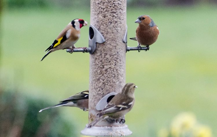 four bords at feeder