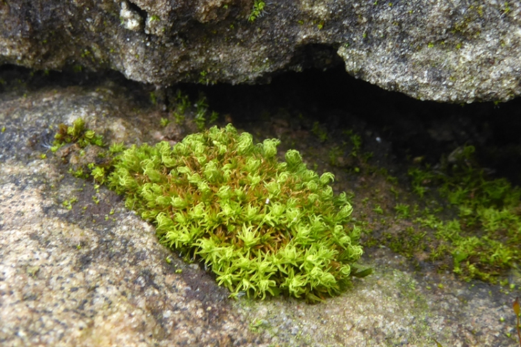 garden moss on old wall