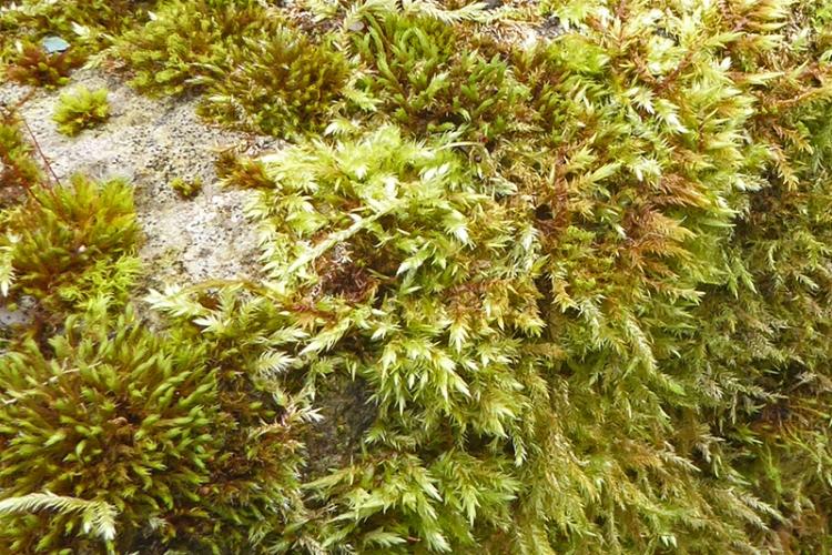 garden moss stone