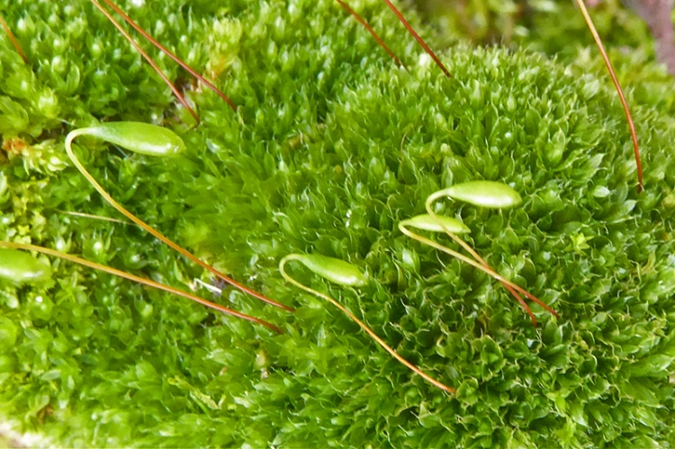 garden moss with seed heads log