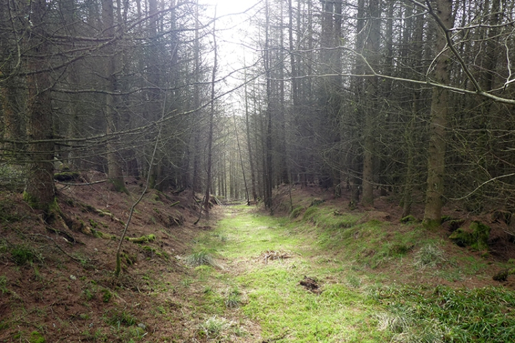 glade at whitshiels