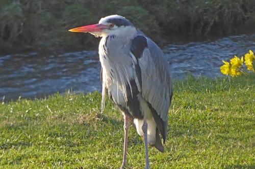 heron one leg