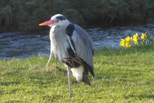 heron two legs