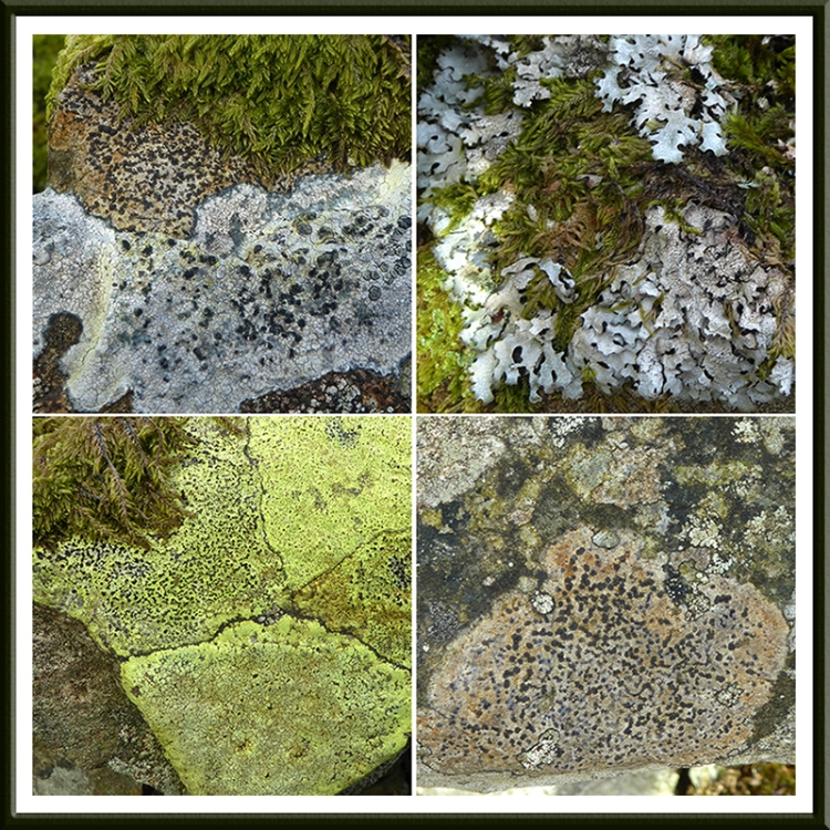 lichen on wall becks road