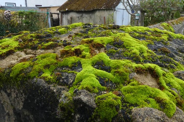 Liz's mossy gatepost