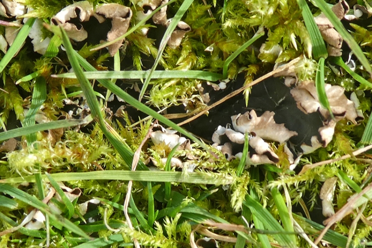 moss and lichen lawn