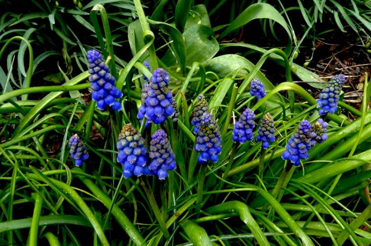 pool of hyacinths