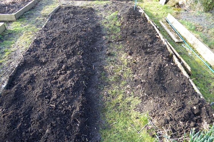 rasps and strawbs dug up