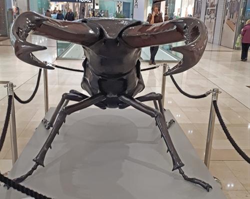 stag beetle derby