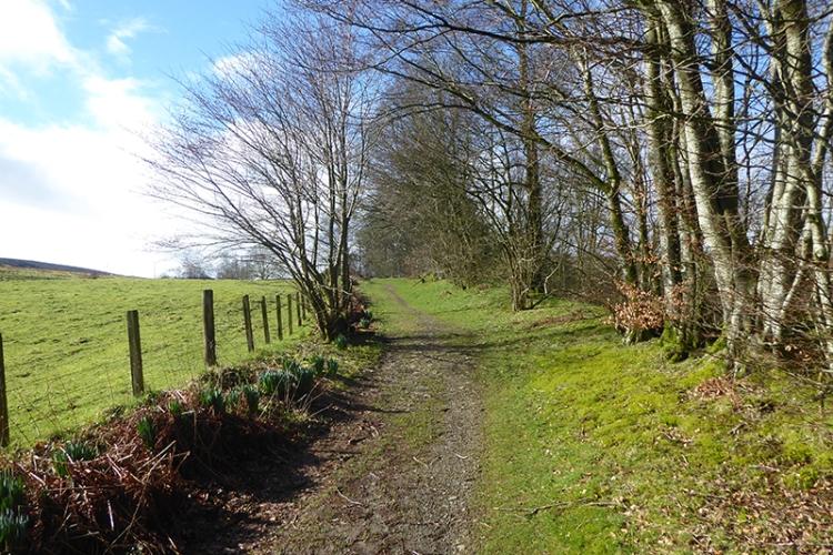 stubholm path
