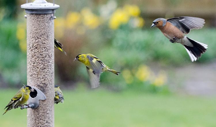traffic stacking at feeder