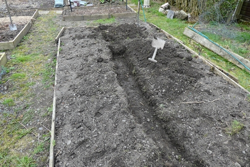 trench in potato bed