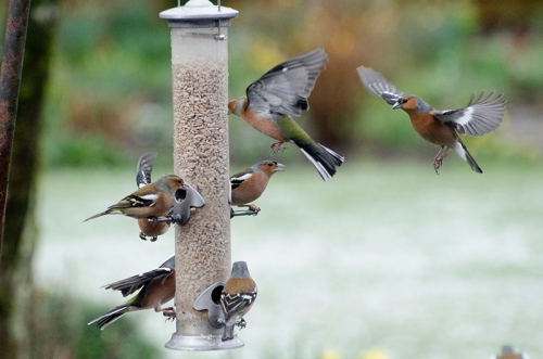 very busy feeder