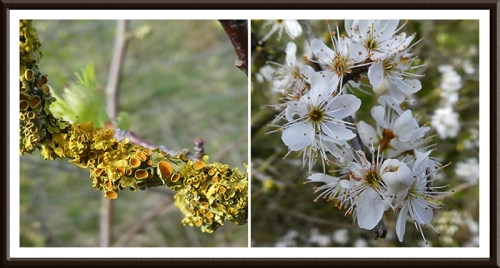 watchree bird pond lichen and blossom