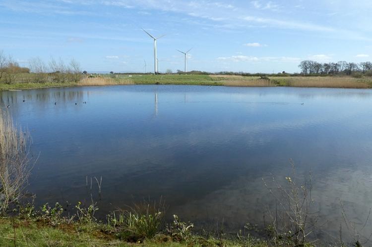 watchree bird pond