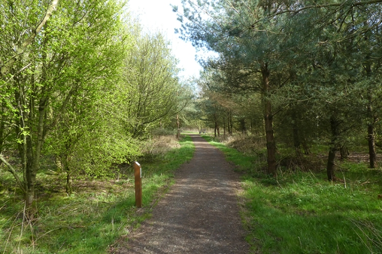watchree wood track green