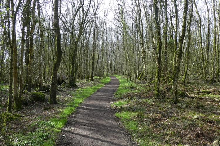 watchree wood track