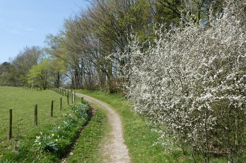 blackthorn stubholm