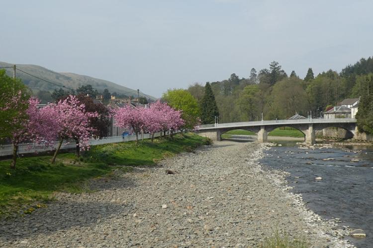cherries by esk between bridges