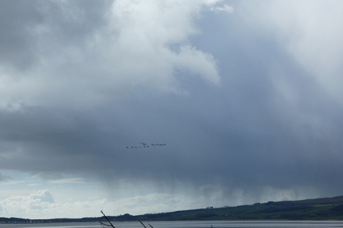 clouds with geese nith estuary