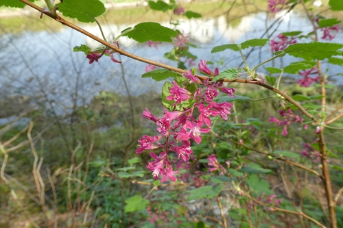currant beside esk