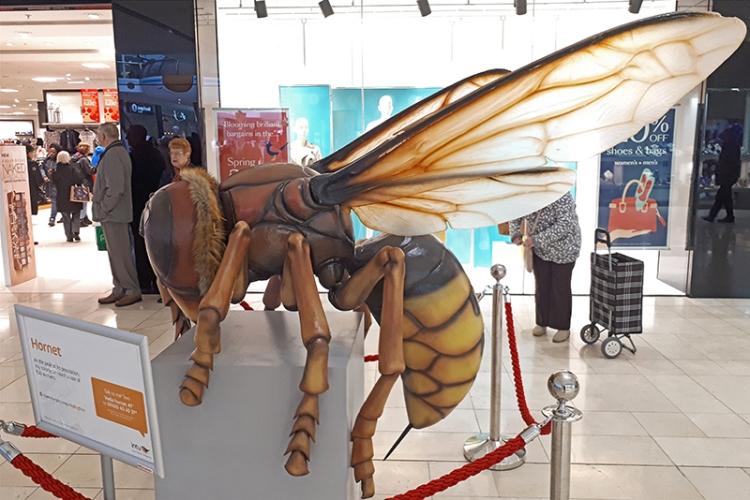 derby hornet