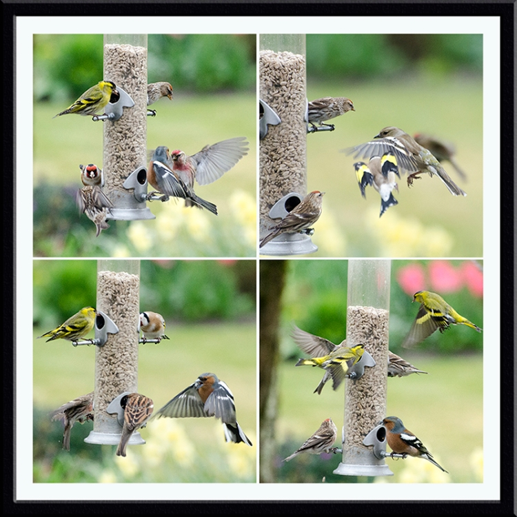four busy feeder panel