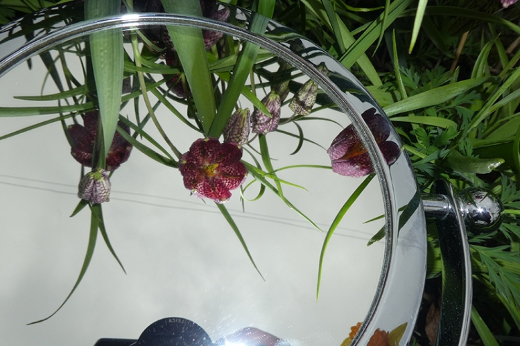 fritillary in mirror with mirror
