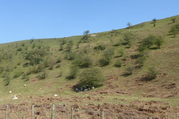 hawthorns on warbla bank