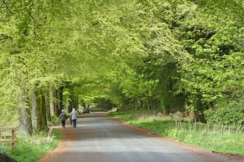 lodge walks late april