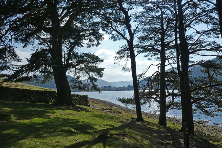 March wood St Mary's Loch (3)