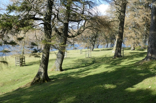 March wood St Mary's Loch (4)