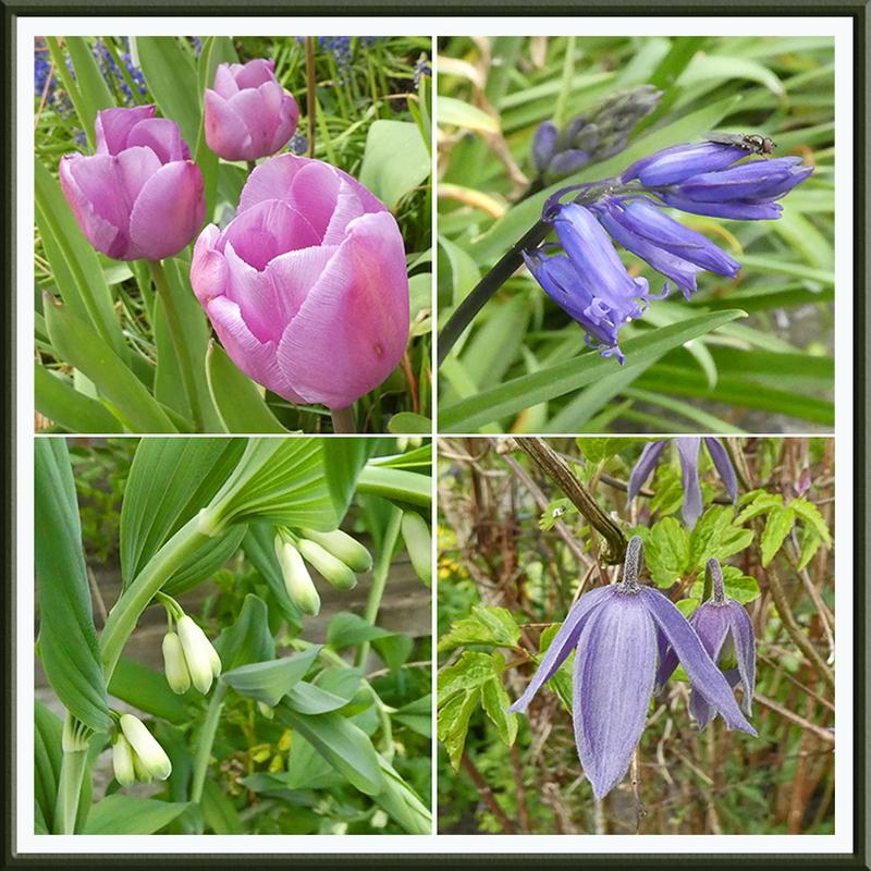 new flowers april