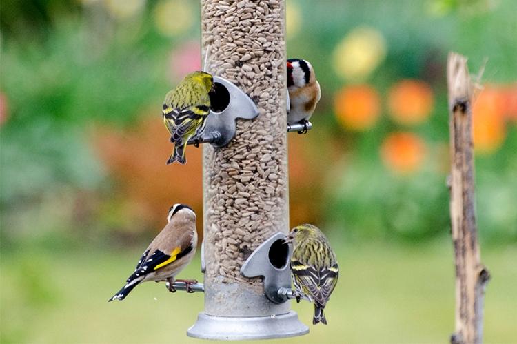 normal feeder