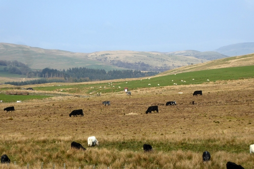 pastoral scene wauchope