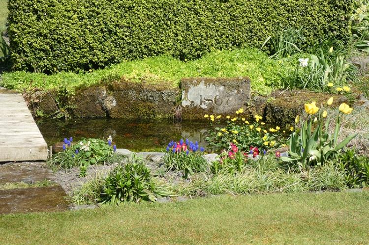 pond in April