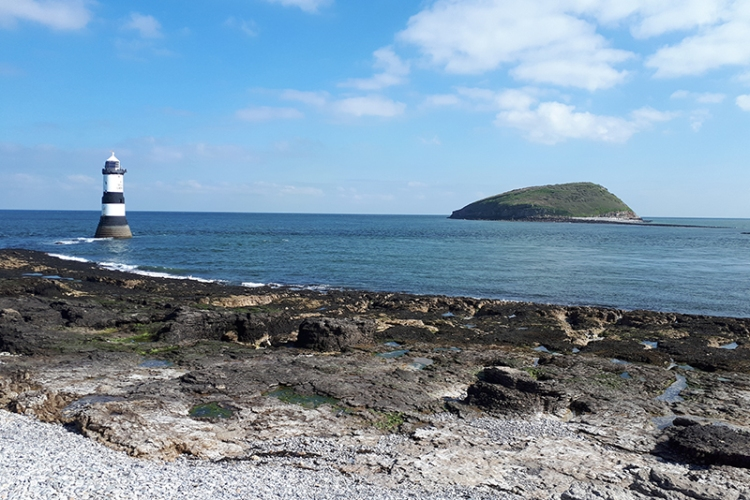 puffin island anglesey