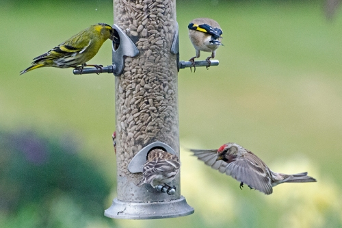 redpoll sees an opportunity