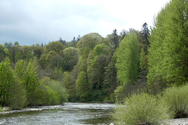 river esk from suspension brig late april