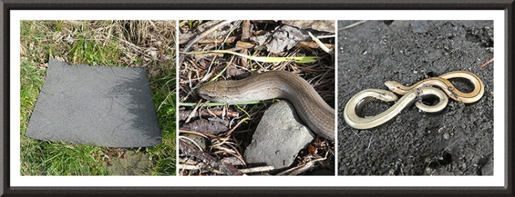 slow worm and mat